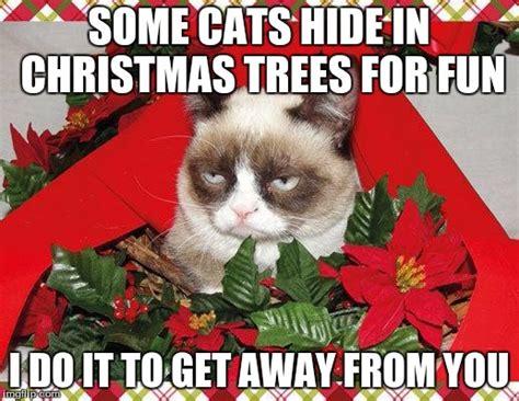 grumpy cat mistletoe meme imgflip