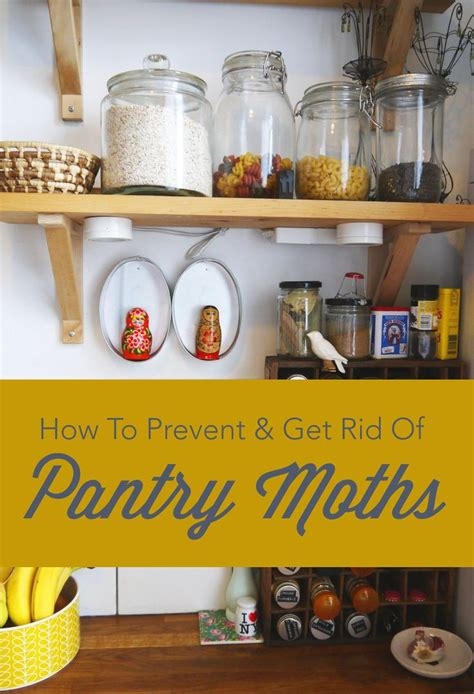 How To Stop Pantry Moths by How To Prevent Get Rid Of Pantry Moths We Pantry And