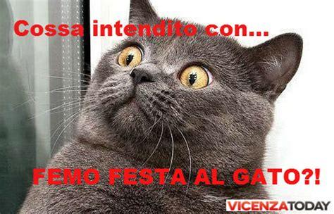 popolare di vicenza on line time la festa gatto a vicenza le 10 regole