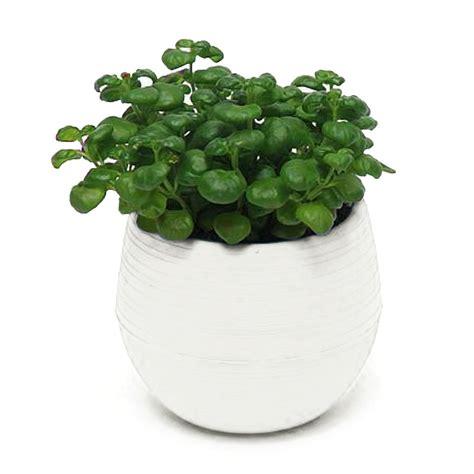 mini potted plants mini round plastic plant flower pots home garden office