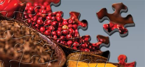 pieces   food safety puzzle food safety magazine