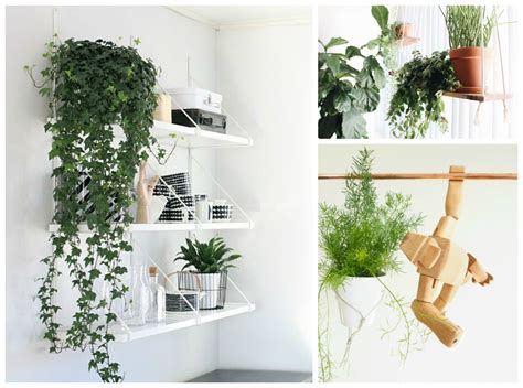 hanging plant ideas 10 hard to kill hanging plants that ll make your home look