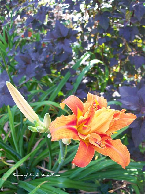 flower pairings on pinterest day lilies beautiful wedding cakes and gardens