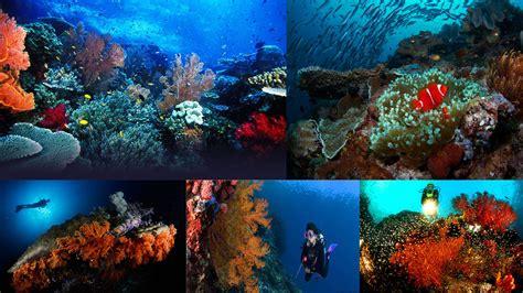 dive raja at in bali island and beyond