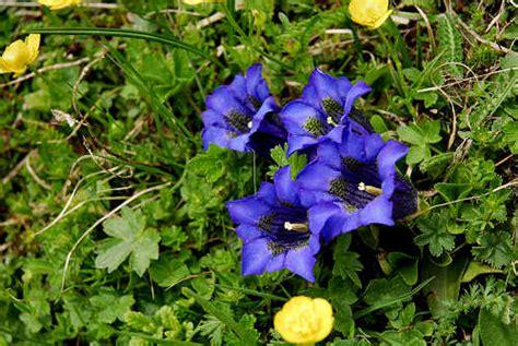 monte co dei fiori lagorai sentiero dei fiori o trodo dei fiori al passo