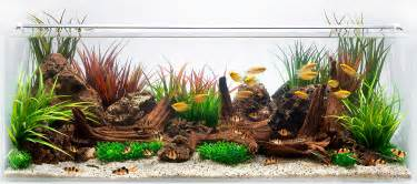 an aquascape for gold gourami decorative freshwater