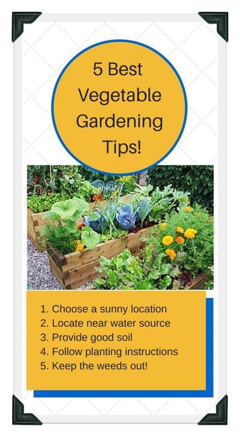 beginner vegetable garden layout beginner vegetable garden layout vegetable gardening for