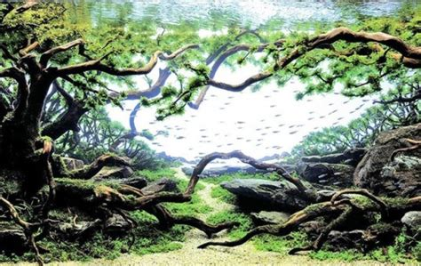 aquascape plant layout mind blowing aquariums look like underwater forests