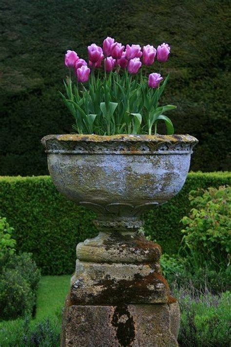 Tulips In Planters tulips in concrete planter pictures photos and images for and