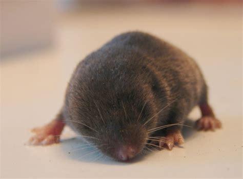 Kid Mol baby mole awe this makes me think of service for sight haha precious baby mole