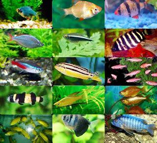 Pajangan Air Blue Pajangan Murah T3009 Irel Aquarium Jenis Jenis Ikan Hias