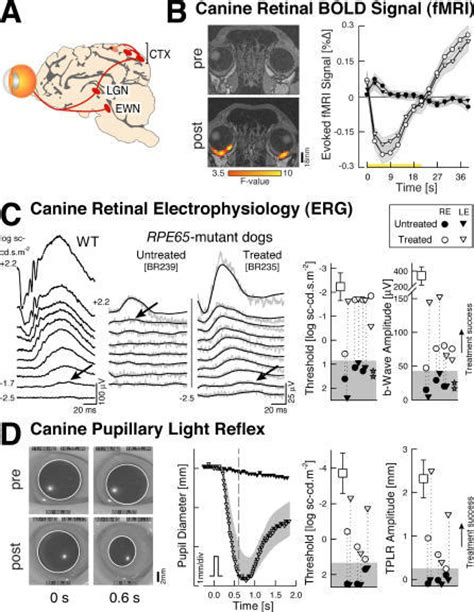 changing faces the consequences of exposure to gene and thyroid disrupting toxins books retinal and subcortical responses in rpe65 mutant dogs
