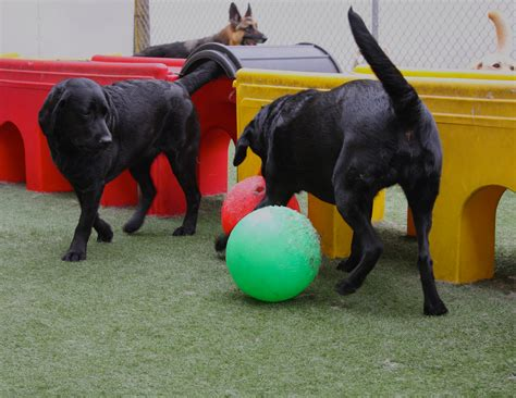 puppy daycare sf pet c to host sunday in the to celebrate new outdoor canine play area may 22
