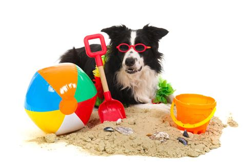 Vacation Pet Pet Pet Product by Summer Vacations Why You Should Think About Taking Your