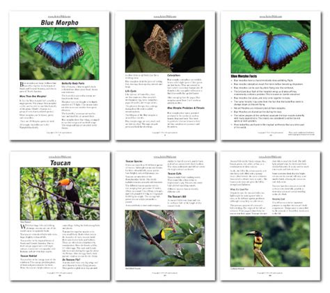 rainforest animals printable facts pack  active wild
