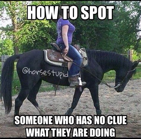 11 best horse memes images on pinterest horses horse