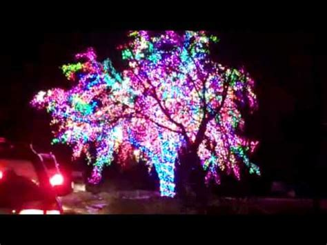 lights columbia mo the magic tree columbia missouri