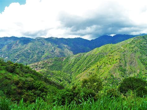 Blue Mountain Jamaican the blue mountains jamaica a peak of a jamaican