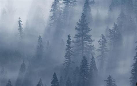 foggy s foggy weather wallpaper app for android