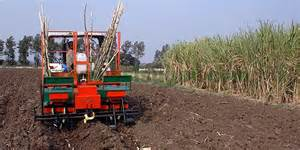 Sugarcane Cutter Planter mechanical sugarcane planter sugarcane cutter planter