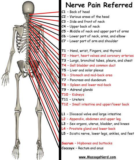 throat tattoo pain level referred pain by spinal level repinned by sos inc