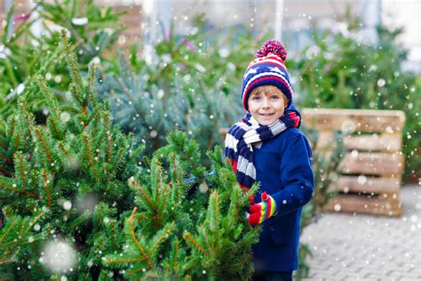 where to buy christmas trees in london