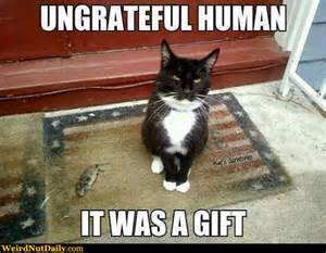 Gifts For Meme - funny pictures weirdnutdaily appreciate cat gifts