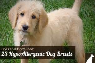 goodbye hair 23 dogs that don t shed hypoallergenic