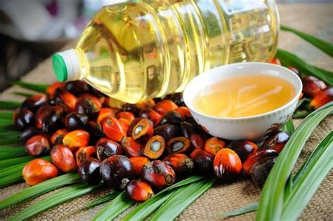 Minyak Kelapa Sawit Di Indonesia mengenal kelebihan dan kekurangan kelapa sawit alodokter
