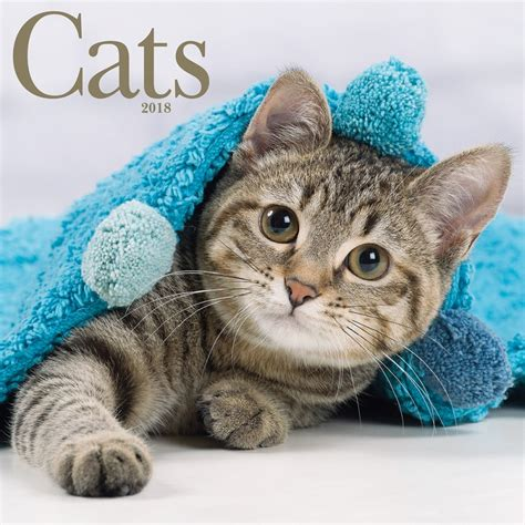 Cat Calendar 2018 Cats 2018 Wall Calendar 841622108138 Calendars
