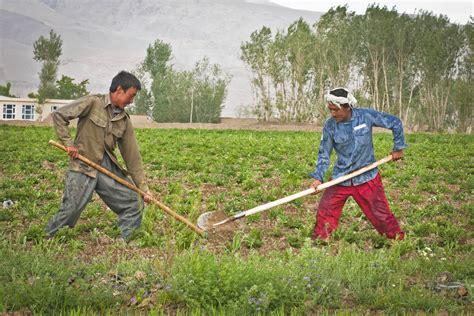 farmer s file afghan farmers in bamyan 2 jpg wikimedia commons