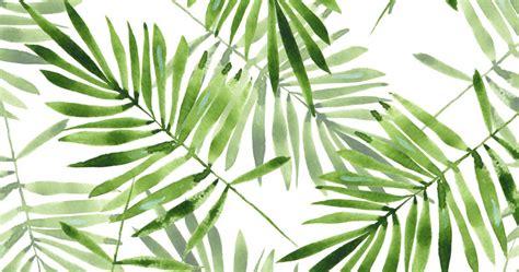 tropical wallpaper   jungle  wallsauce