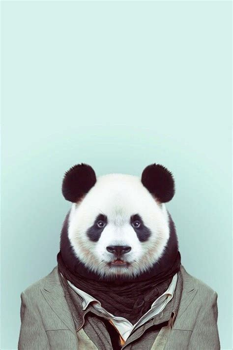 wallpaper iphone panda panda celebrate world animal day and download these cute
