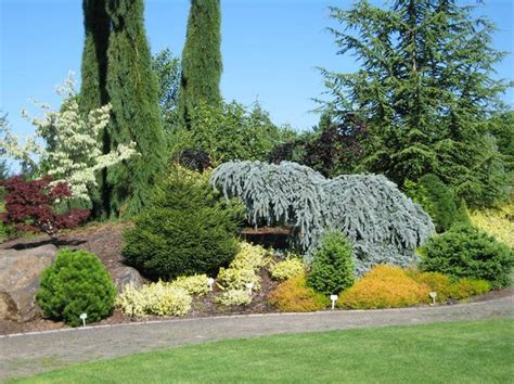44 best conifers images on pinterest landscaping garden