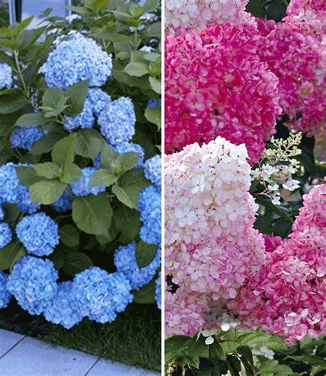 Lieferzeit Baldur Garten by Lieferzeit Baldur Garten Lyfa Info