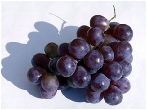 Grape Fast Detox by Try Grape Diet To Lose Weight And Detox