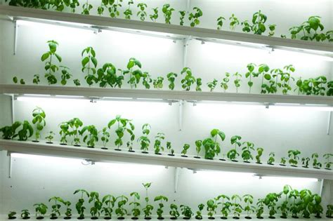hydroponics  small apartments garden culture magazine