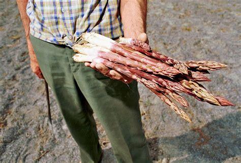 come posso cucinare gli asparagi cosa coltivare dopo gli asparagi vita in cagna