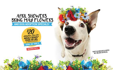 puppy adoption san antonio april showers bring may flowers adoption special animal defense league of