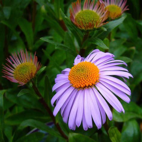 flora garten flora garten jamgo co
