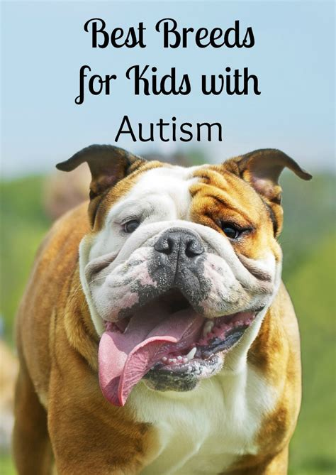 best dogs with best dogs for with autism dogvills