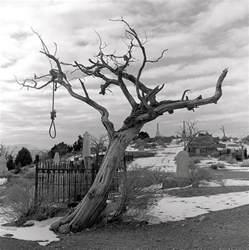hanging tree photograph by harry snowden