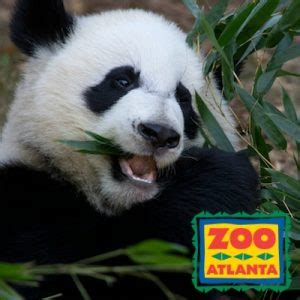 Zoo Atlanta Gift Card - zoo atlanta discount tickets free admission deal atlanta on the cheap free
