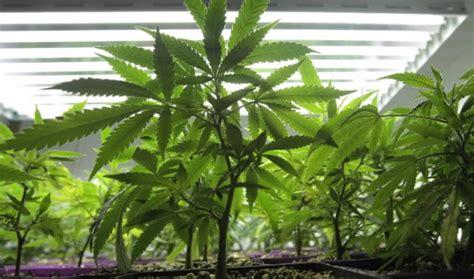 Hn Pot Stiker Isi 30gram illinois to legalize and decriminalize marijuana