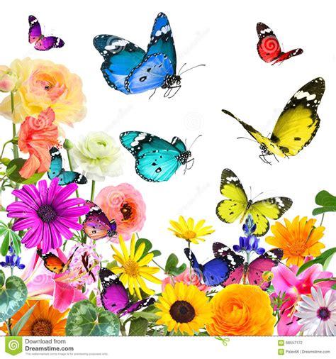 imagenes de rosas y mariposas bellas flores y mariposas hermosas coloridas aislado en blanco