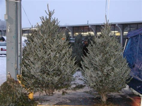 christmas trees for sale rochester ny public market