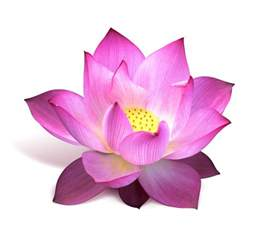Real Lotus Live The Eternal Way