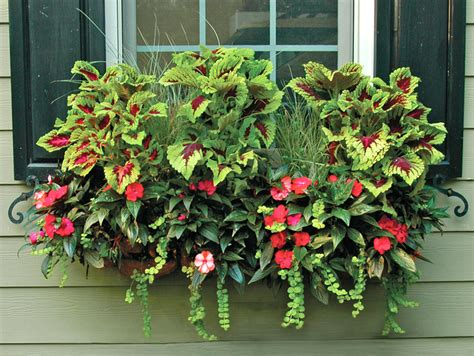 plant window boxes window box and wall planter photo gallery
