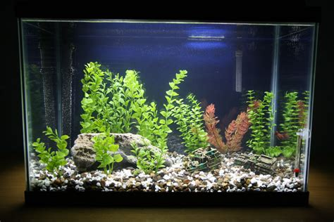 Decorating Ideas For Fish Tank Home Aquarium Decoration Design Ideas For House