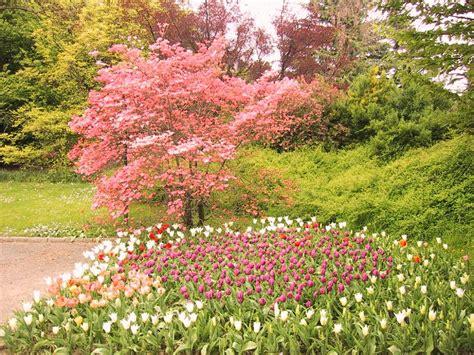 imagenes con movimiento de jardines sfondi per lo schermo fiori giardini